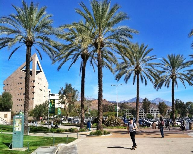 palmtreesandpointything